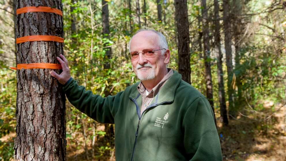Steve McKeand, professor of forestry and environmental resources in the College of Natural Resources at NC State University and director of the university's Cooperative Tree Improvement Program