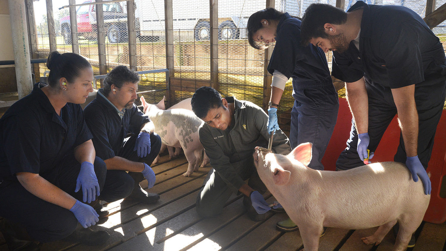 Sid Thakur teaching students about pigs