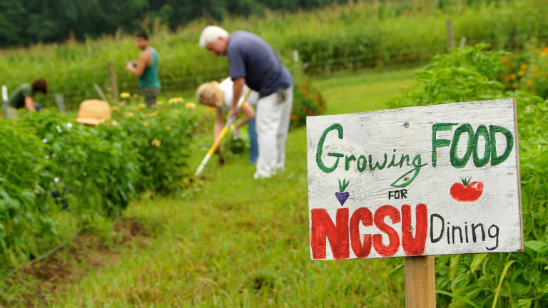 Faculty and staff volunteers weed around crops at the Agroecology Education Farm during a volunteer work day.