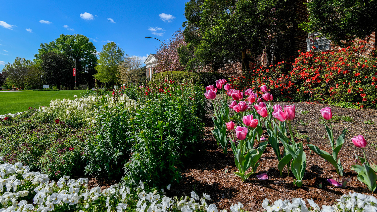 Holladay Hall in the spring