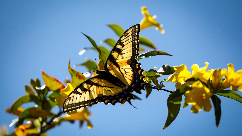butterfly on flowers